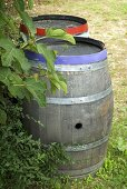 Old wooden barrel in a garden