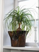 A palm in a wooden pot on a window sill