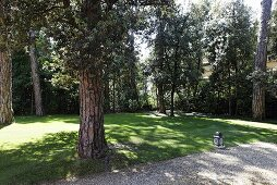 Garden with old trees and a lantern at the side of a gravel path