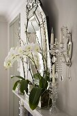 White orchids on a mantelpiece and wall candle holders with crystal decorations next to a mirror