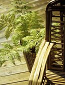 Rattan garden chair and a fern in a bamboo plant pot on wooden planks