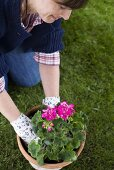 Woman planting geranium in terracotta pot