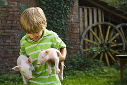 A boy carrying piglets