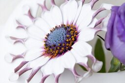 A blue daisy in a round vase
