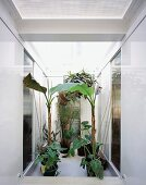 Banana trees in white stairwell lit from above