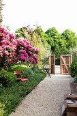 Kiesweg mit üppig blühendem Rhododendron in seitlichem Beet und Blick auf hölzernes Gartentor im Hintergrund