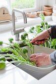 Mit dem Arrangieren eines grossen Mohnblumenstrausses beschäftigte Frauenhände in einer modernen Küchenspüle