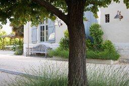Baum vor einem Landhaus mit alter Holzbank neben eingefasstem Beet vor Hauswand