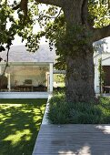Old, shade tree in front of contemporary building embedded into landscape with view into interior through glass walls