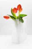 Tulips in white plastic bag