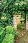 Formgeschnittene Buxhecke vor berankter Gartenmauer und offenem alten Holzgartentürchen mit Blick in einen Garten mit Bäumen.