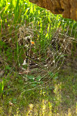 Prey caught in spider's web in sunny garden