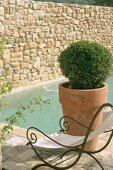 Ein schmiedeeiserner Liegestuhl neben einer Buchsbaumkugel am Pool