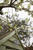Flowering fruit tree next to garden shed