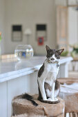 Cat sitting on bar stool with animal skin cover