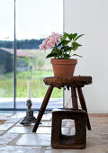 Orchid in terracotta pot on rustic footstool in front of panoramic window
