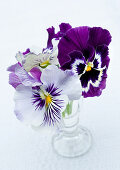 Glass vase of violas