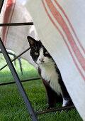 Cat sitting underneath table in garden