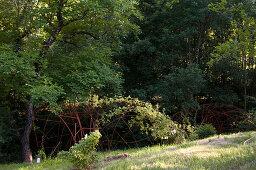 Garden landscape with a rose pergola