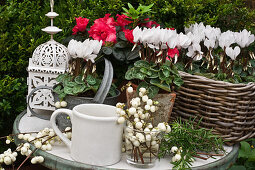 Snowberries, cyclamen, azaleas and lantern on small garden table
