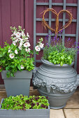 Flowers, herbs and lettuce in containers on terrace