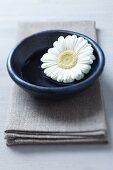 Gerbera bloom in dish on linen napkin