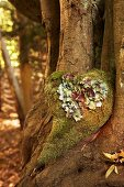 Moss heart on tree trunk