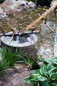 Pond complex in garden - stone basin with delicate water channel made from split bamboo cane