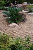 Small palm ferns and boulders in Japanese-style gravel garden