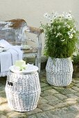 White-flowering plant in wicker planter and matching stool in front of shabby chic vintage bench
