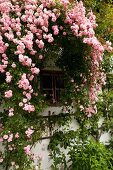 Detail of farmhouse facade covered in pink climbing roses