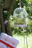 Apples in bird cage hanging from tree