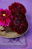 Crimson dahlia flowers in teacup and saucer on embroidered linen napkin
