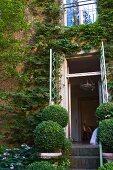 Buchsbaumkugeln am Treppenaufgang vor offener Terrassentür eines Wohnhauses mit berankter Backsteinfassade