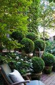 Vintage Holzliege neben Töpfen mit Buchsbaumkugeln und Bäumen in einem Stadtgarten