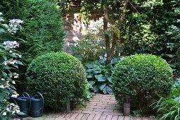 Zwei Buchsbaumkugeln im bewachsenen Innenhof mit Klinkerboden