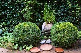 Zwei Buchsbaumkugeln und Wasserschalen auf Klinkerboden in einem Innenhof
