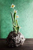 Spring flowers in wooden container