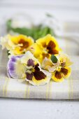 Colourful pansies lying on table