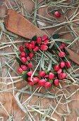 Small wreath of hypericum