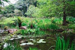 Teich mit Seerosen in wildem tropischem Garten