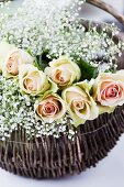 A basket of salmon-pink roses with gypsophila