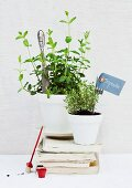 Potted herbs with knife and fork as plant labels