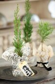 Miniature thuja trees in wrapping paper with card tags
