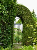 Topiary thuja hedge over wrought iron, arched garden gate with view of front garden and garage