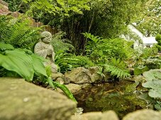 Small, established garden pond with rock border and statue of Buddha in posture of prayer on edge surrounded by ferns and other greenery; white house in background