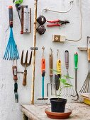 Various gardening tools clearly arranged on wall; seedling on wooden table used as a worksurface in foreground