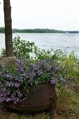 Purple flowers in rusty iron planter; open lake landscape in background