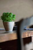 Small pot of herbs on dining table