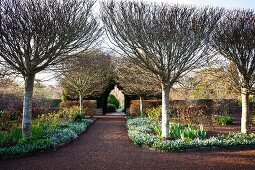 Well-tended gardens with path leading between hedges and rows of trees